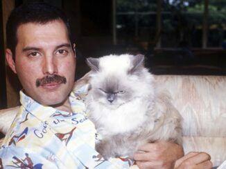 Freddie Mercury gatos